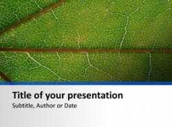 叶子,植物,生物,叶脉,绿色素,光照,光合作用