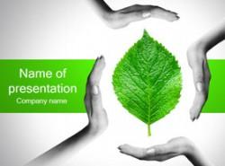 树叶,自然,呵护,手,保护自然,自然界,绿色,世界绿色组织
