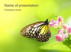 生物,野生动物,蝴蝶,春天,花朵,自然动物,绿色