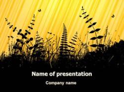 剪影,植物,中介,生态,花草,自然,黄昏,野外,荒郊