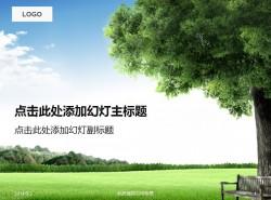 生命之树感叹岁月
