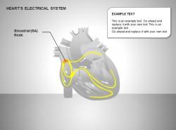 心电系统窦房结图示说明