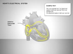 心电系统前节间部位图示说明