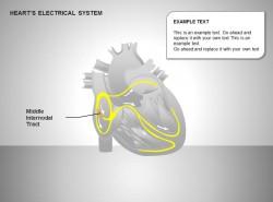 心电系统中节间部位图示说明