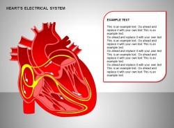心电系统全彩全景图