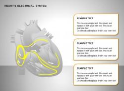 心电系统三部分文字说明