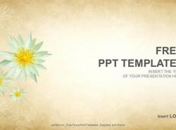 优雅花卉PPT(16:9)