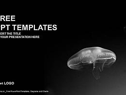 可怕的水母PPT模板下載