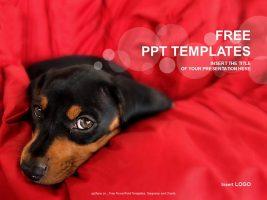 床上的宠物狗PPT模板下载