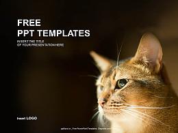 可愛貓咪PPT模板下載