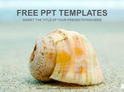 沙滩的海螺PPT模板下载