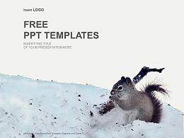 雪地里的松鼠PPT模板下載