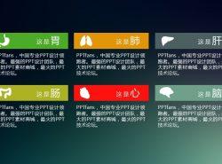 胃、肺、肝、肠、心、脑的介绍ppt素材模板