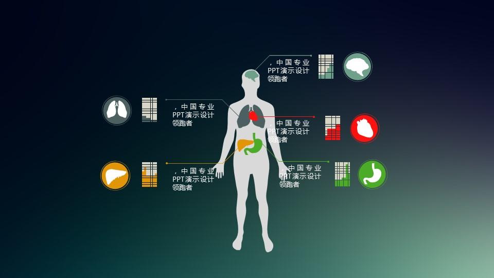 人体大脑、肺、心脏、胃、肝脏说明PPT素材下载_预览图1