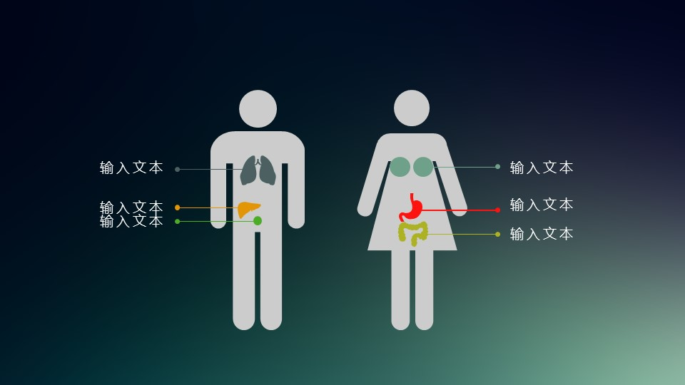 男性与女性的身体差异分析PPT素材_预览图1