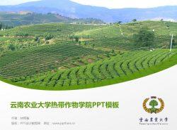 云南农业大学热带作物学院PPT模板下载