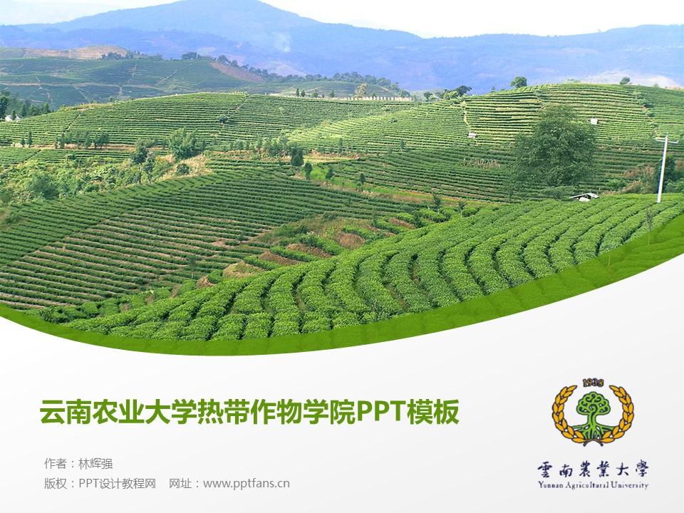 云南农业大学热带作物学院PPT模板下载_幻灯片预览图1