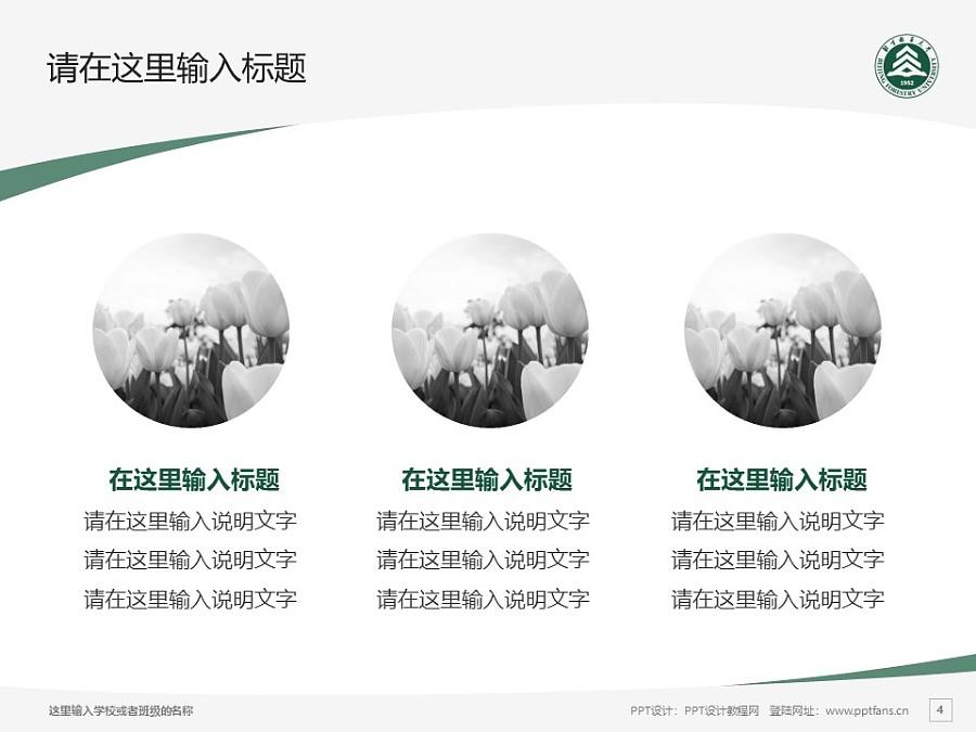 北京林业大学PPT模板下载_幻灯片预览图4