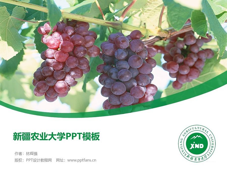 新疆农业大学PPT模板下载_幻灯片预览图1