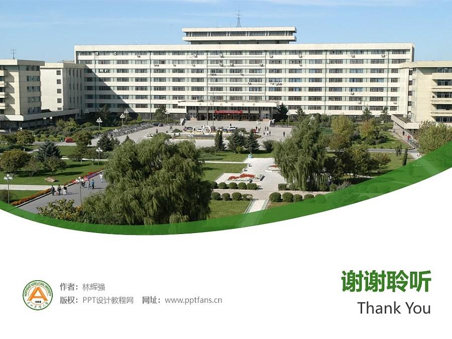 东北农业大学PPT模板下载_幻灯片预览图31