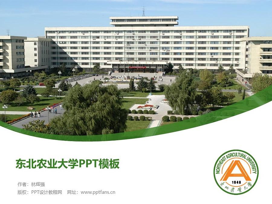 东北农业大学PPT模板下载_幻灯片预览图1
