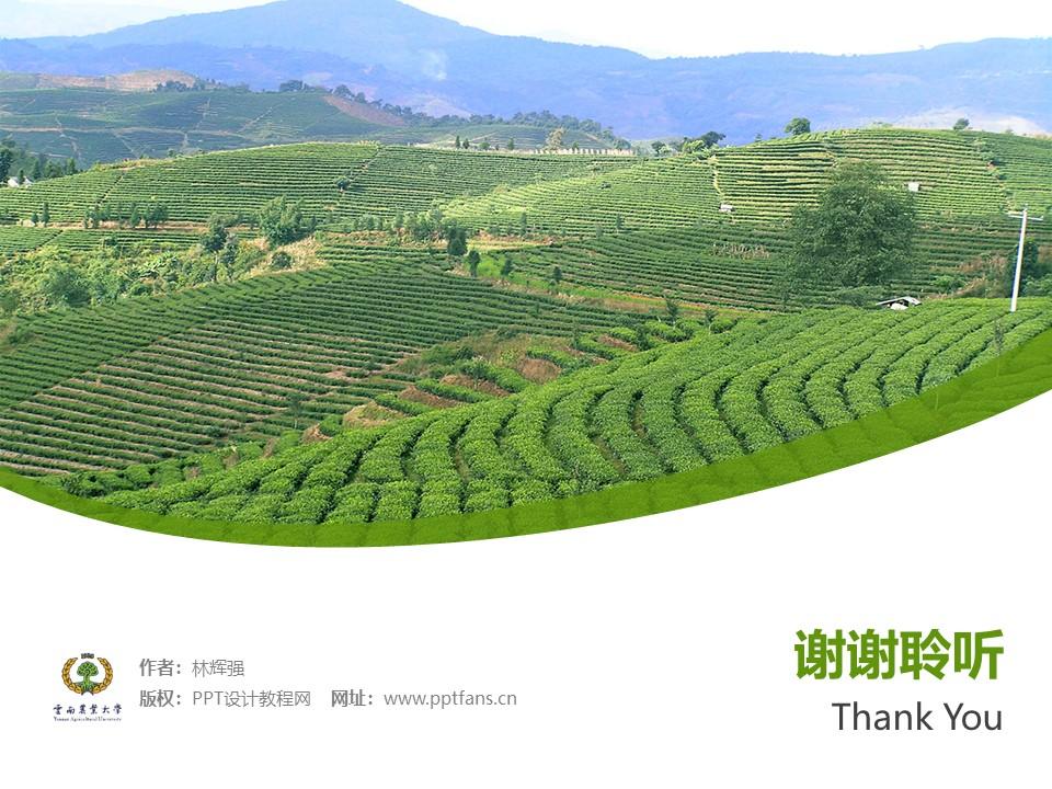 云南农业大学热带作物学院PPT模板下载_幻灯片预览图32